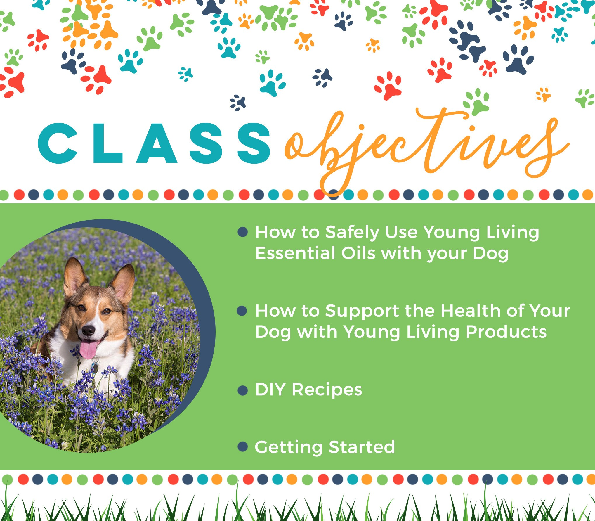 Which oils are safe to use?  How much can I apply?  Should I diffuse or apply topically?  These are our most asked questions when it comes to using essential oils on our dogs!   Whether you're a beginner or an expert, here are a few things to keep in mind:    * Most animals are more sensitive than humans to essential oils.  * Start by diluting heavily and use in moderation.  * Every animal is different, so carefully observe how each animal responds to the oils. Use common sense and good judgment as you try different methods.  * Take special care to not get essential oils in an animal's eyes.  * Avoid using high-phenol oils such as Oregano and Thyme undiluted with any animal.