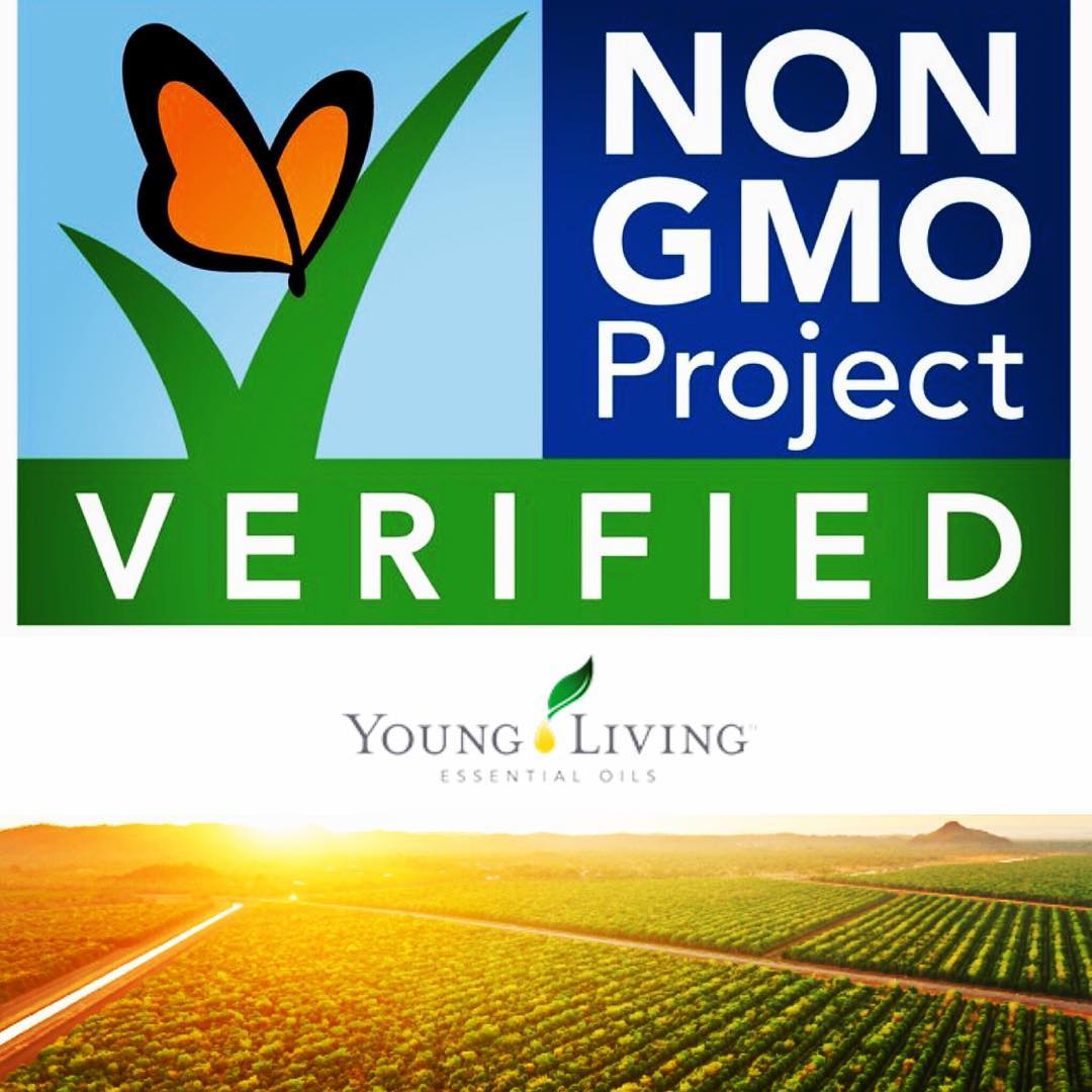 Non GMO Verified - Our company is literally the BEST! Nothing else compares to our processes and our product quality.We're proud to move forward with our Seed to Seal story and announce that all Young Living Plus essential oils are now Non-GMO Project Verified! Together, Young Living and the Non-GMO Project are pledging to members across the globe that our bottles of Plus oils meet the highest standard for GMO avoidance.To receive this certification, all Plus oils passed through third-party verification, auditing, and testing. The US also received Non-GMO Project Verified certification on all their oils from the Vitality line. This distinction is yet another example of our Seed to Seal® quality commitment.