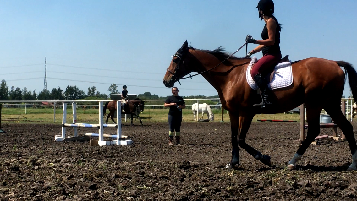 Bold Equine