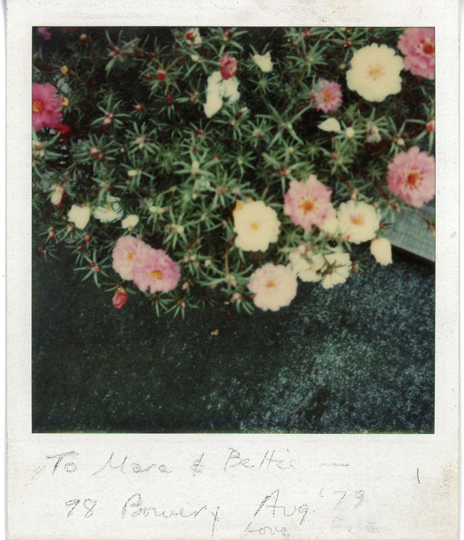 Plants growing on the roof. Polaroid by Eve, 1979.