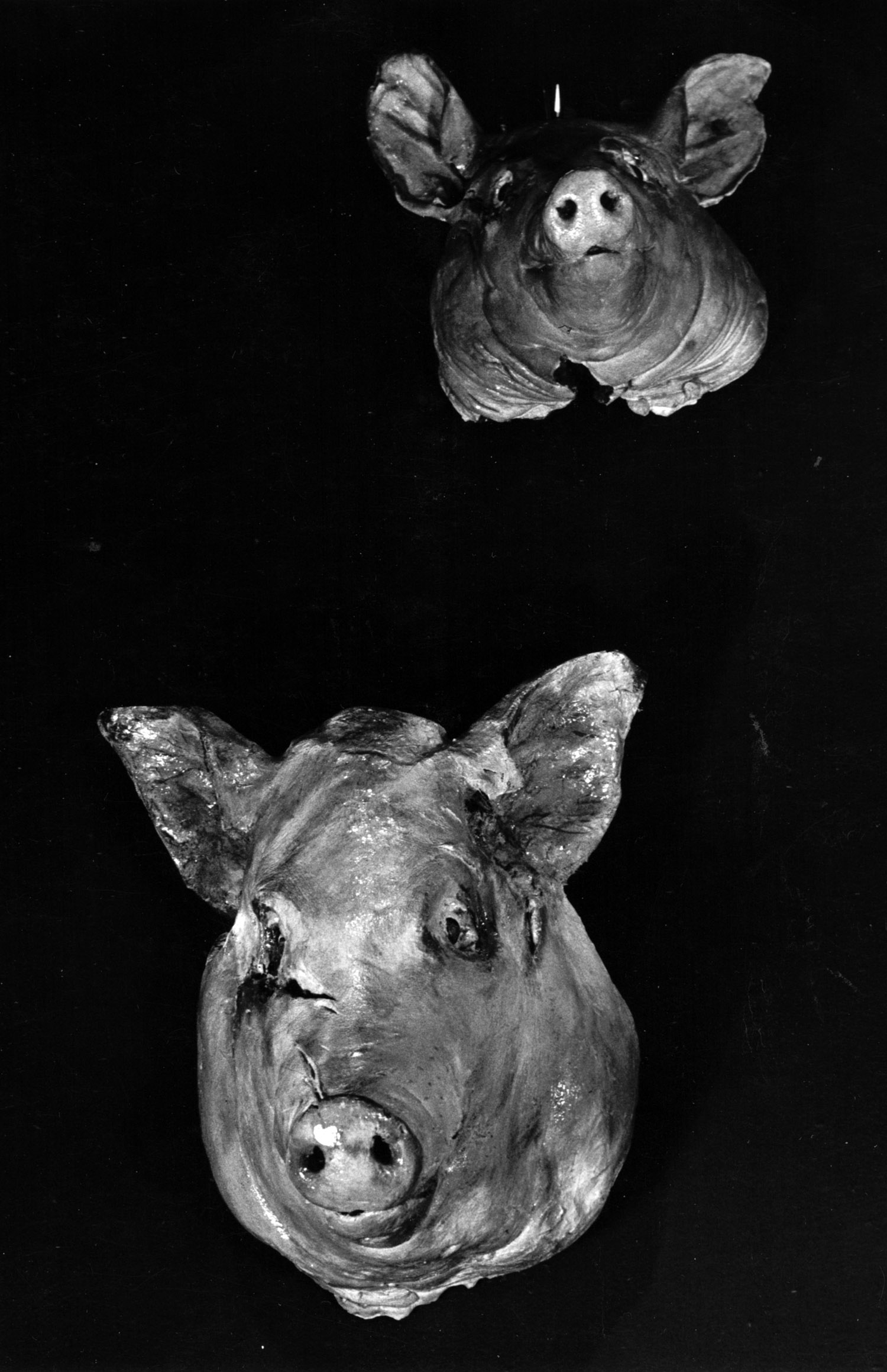 Debby Davis, cast and painted pig heads, 1984