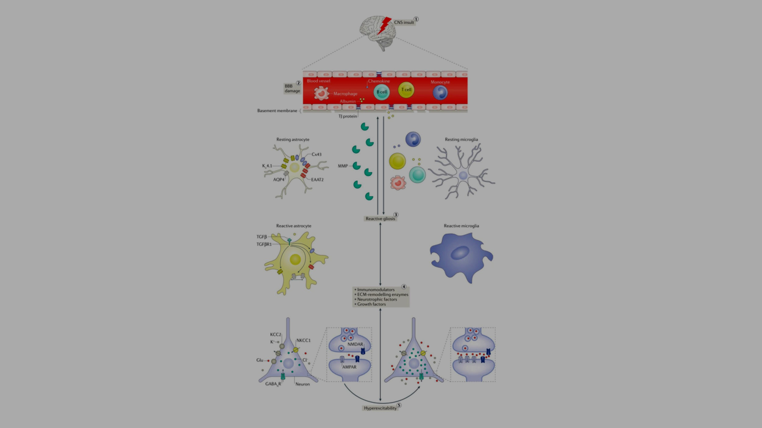 Neuron-glia interactions in the pathophysiology of epilepsy