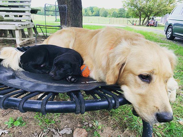 Sleeping buddies for life. Berkley baby & Emma bones