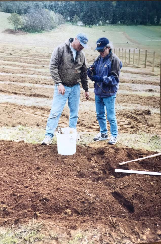 The second planting of Pinot Noir vines at the Wy'East Vineyard, circa 1995