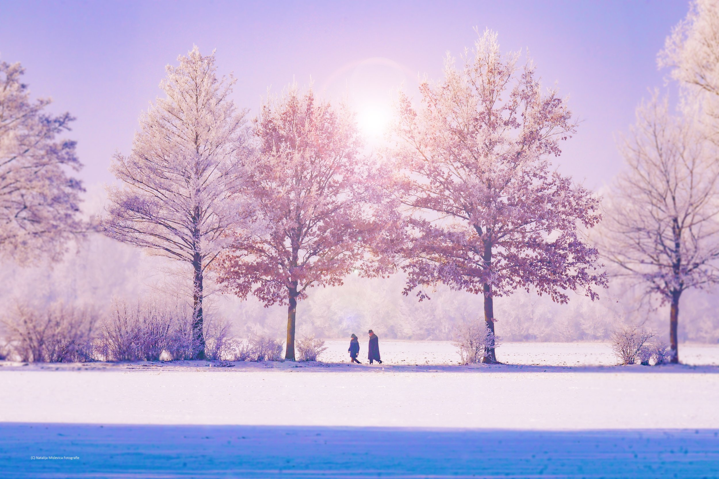 branch-cold-couple-306825.jpg