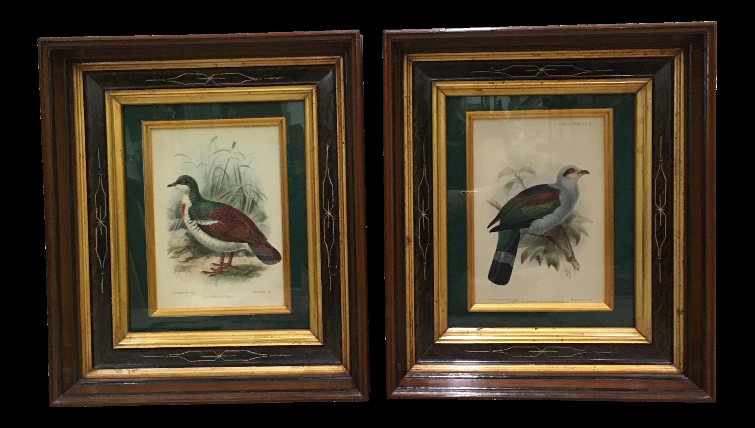 J. G. Koulemans Hand Colored Bird Lithographs - A Pair