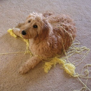 This bored dog should have had an engaging toy instead of getting into the ball of yarn.