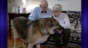 Devoted and Determined Dog saves elderly couple by tunneling them out of snow and dragging them to safety.