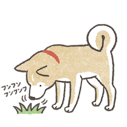 shiba_inu_20.png