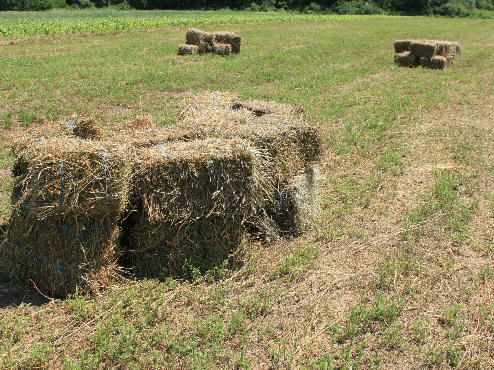 agriculture-87581_1920.jpg