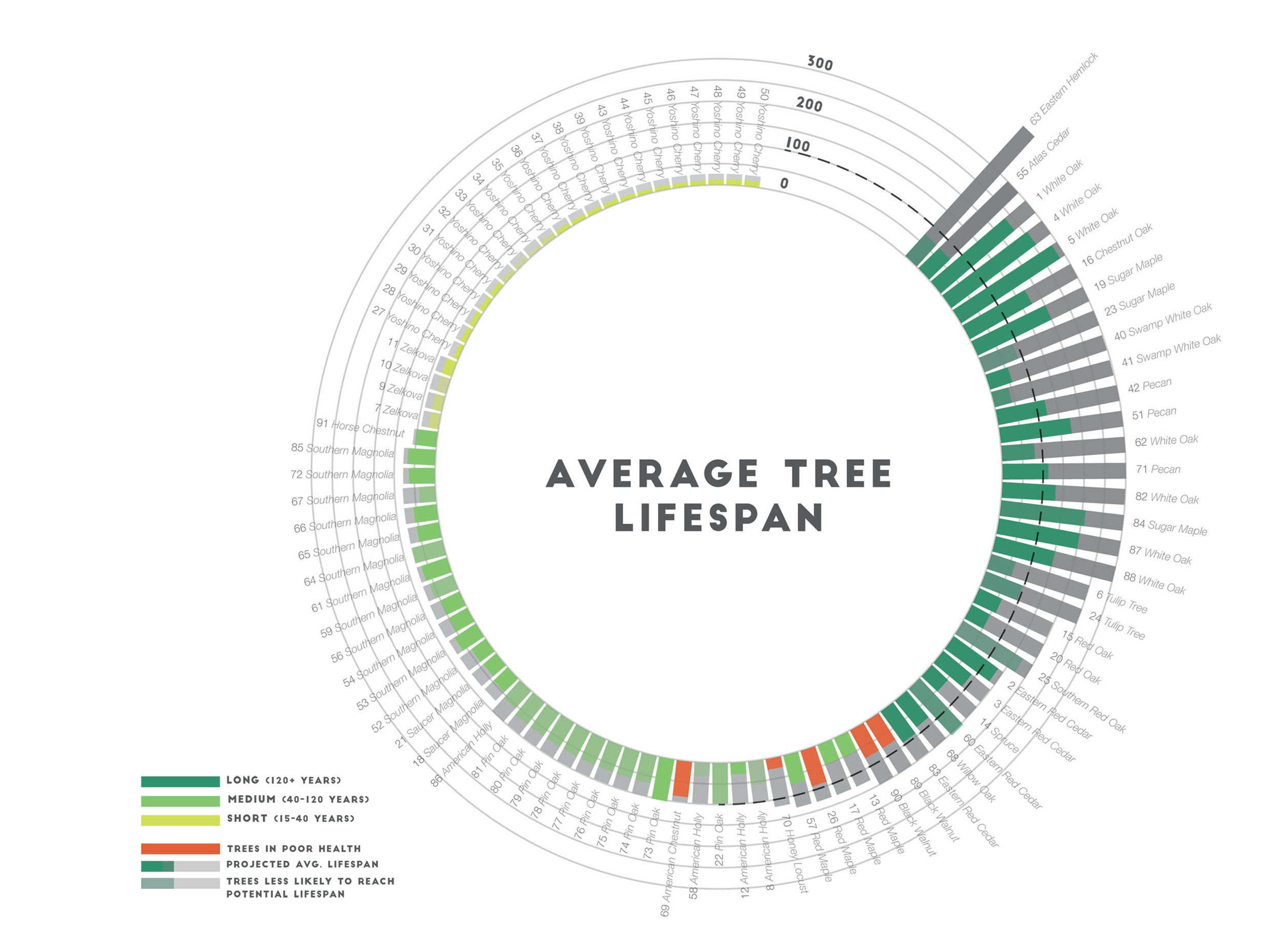 We documented nearly one hundred trees by species, size, presumed age, and health. This drawing shows the expected lifespan of the trees currently planted on campus and the life likely still left amongst the trees. Our conclusion was that the campus was largely planted with short-lived trees near the end of their lifespan.