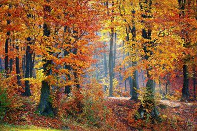 Fall-161006-57f6b1af79328-400x267.jpg