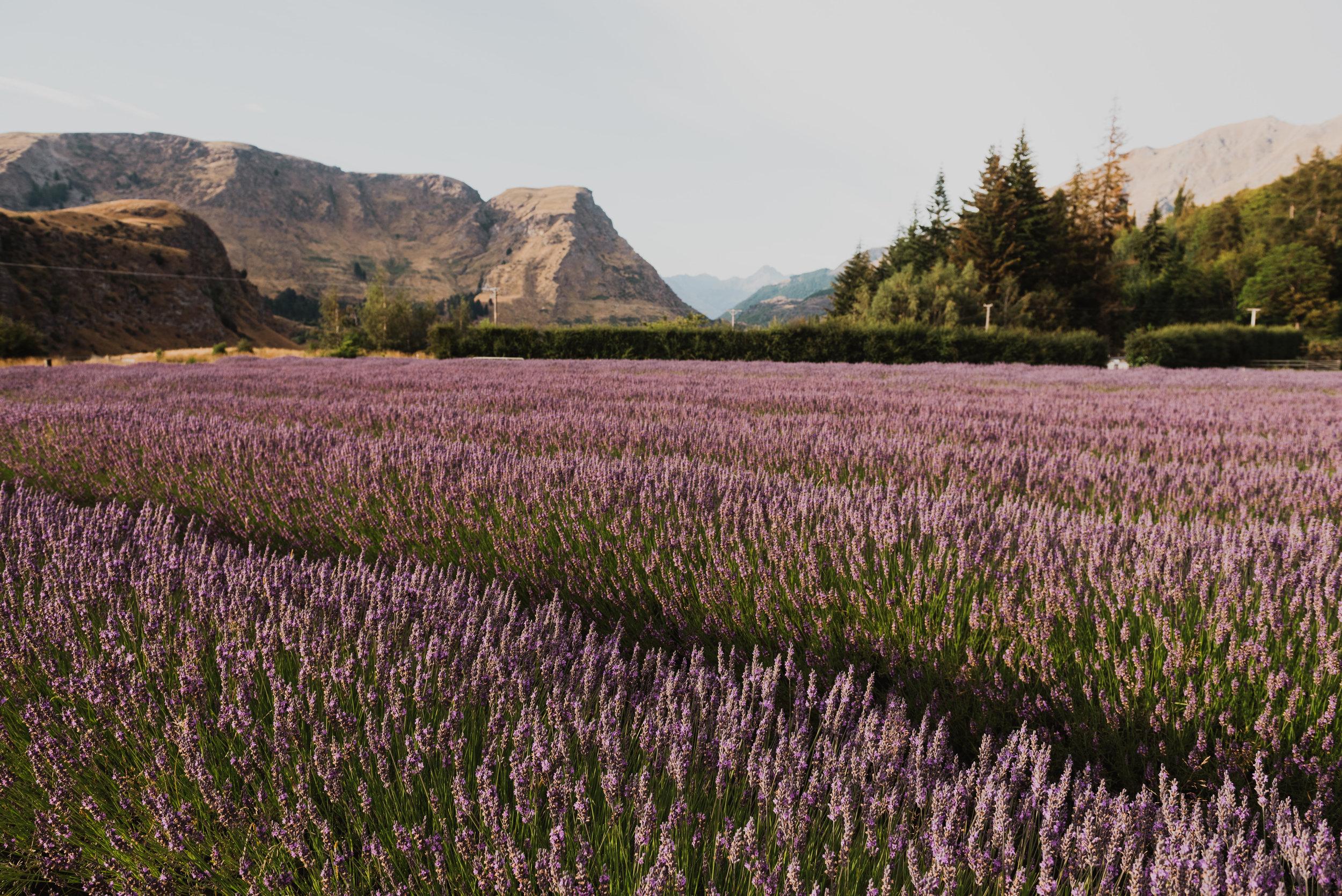 Lavender+Starbar-10.jpg