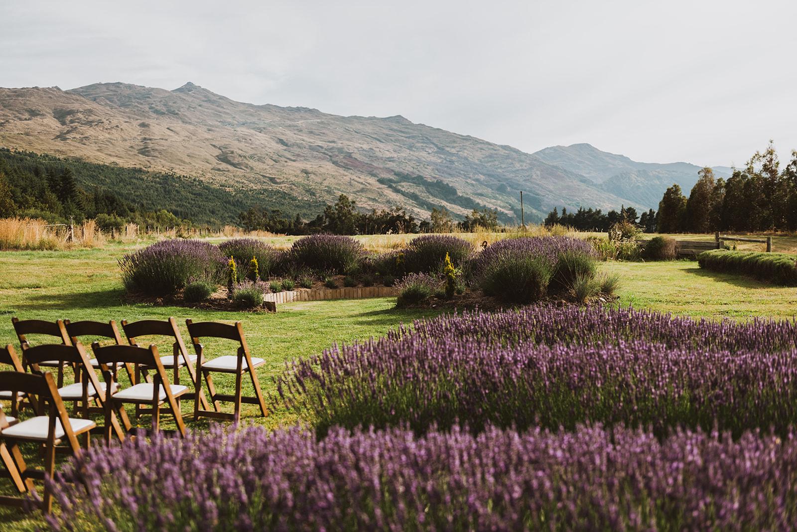Ben Lomond Lavender 3.jpg
