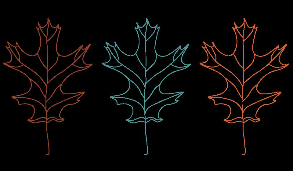 Leaf-Illustrations-3.png
