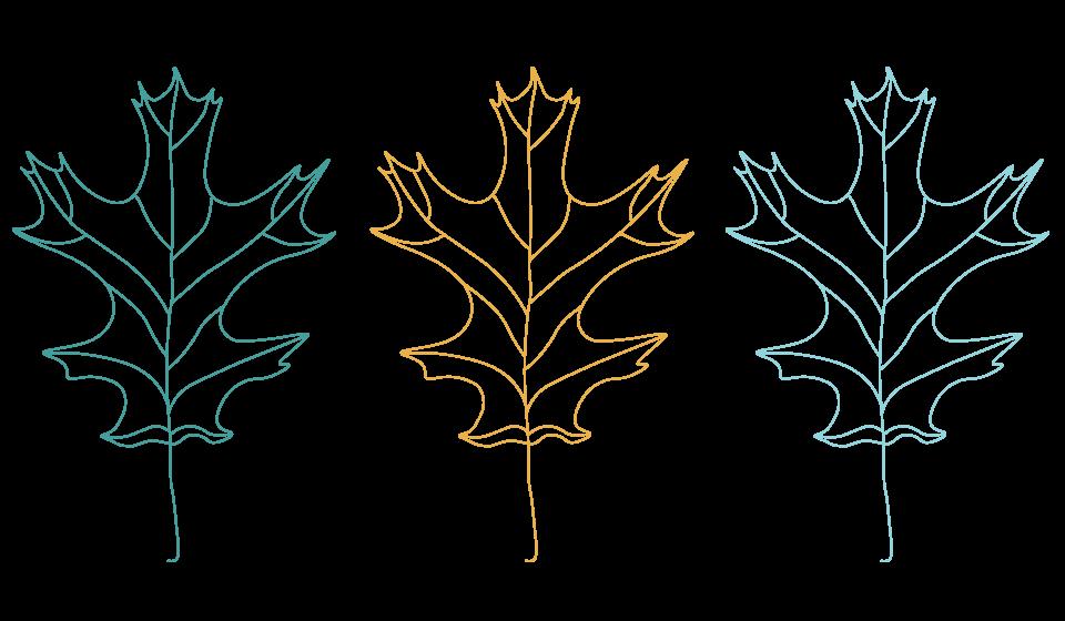 History-Leaf-Illustrations.png