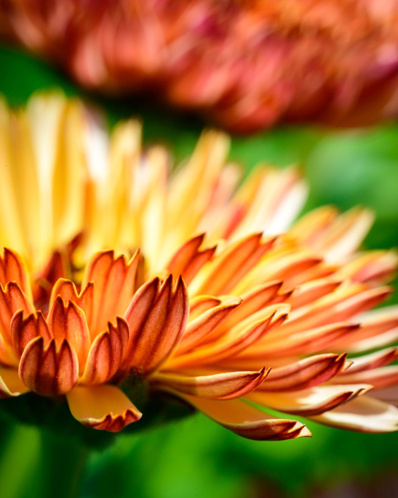 Flower Bloom_10.JPG