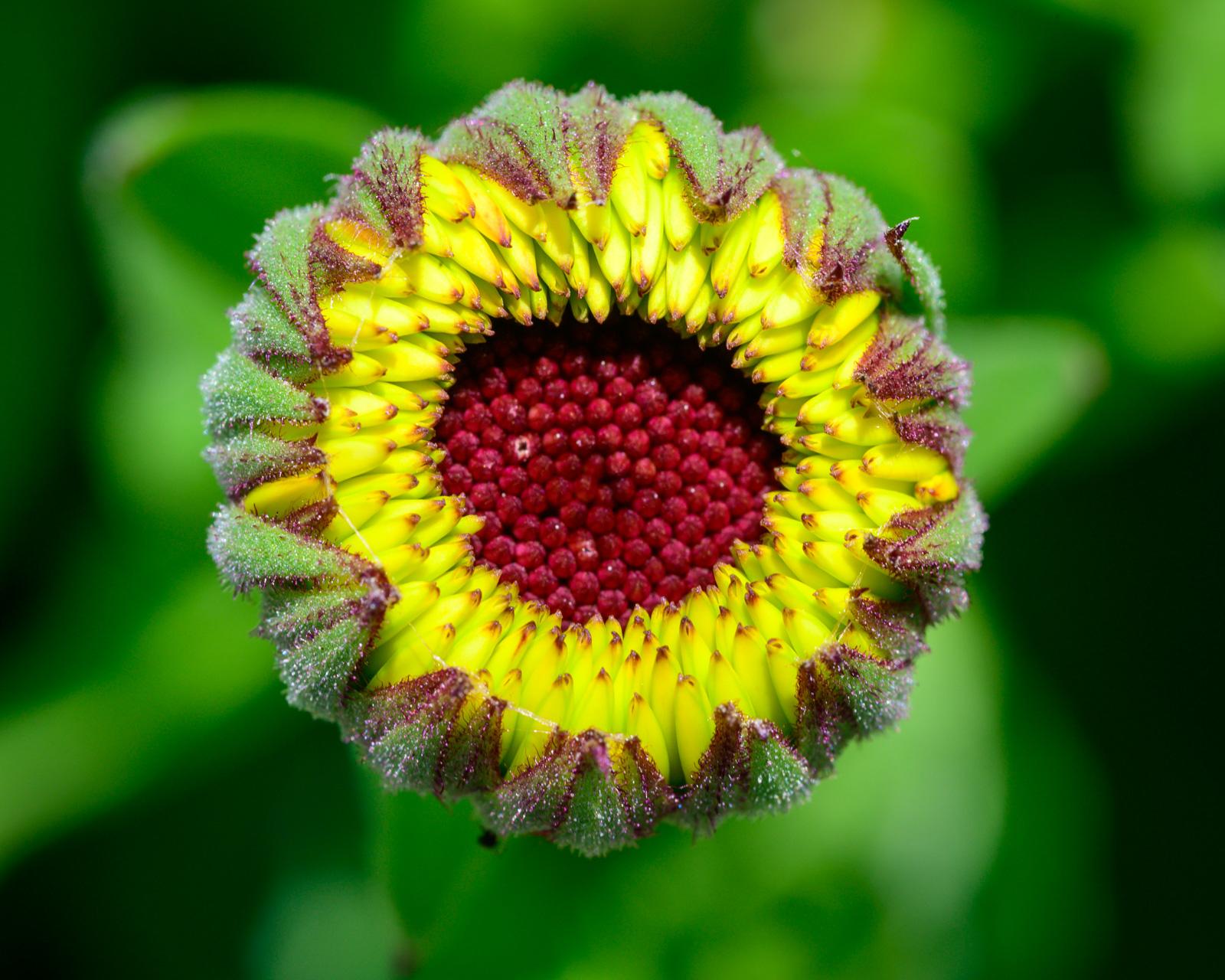Flower Bloom_6.JPG