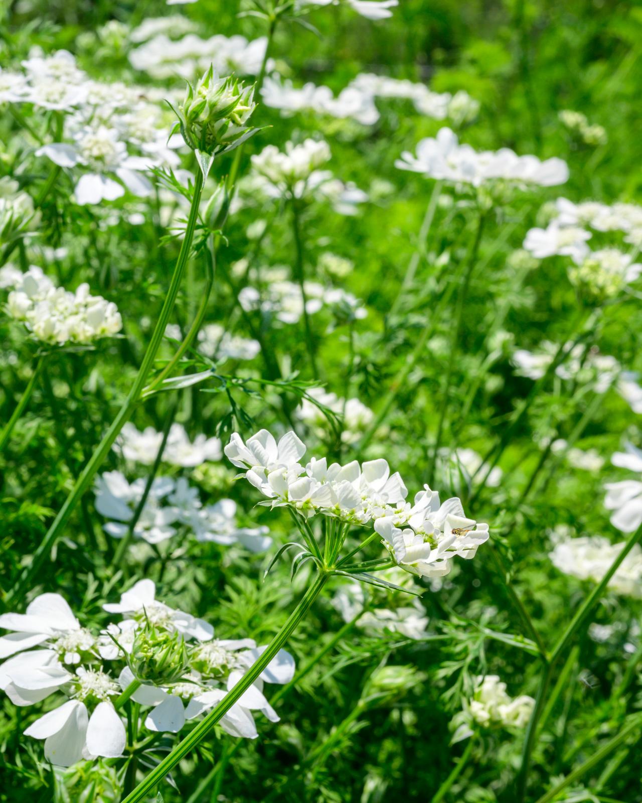 Flower Bloom_17.JPG