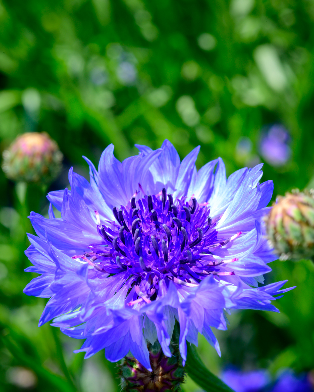 Flower Bloom_20.JPG