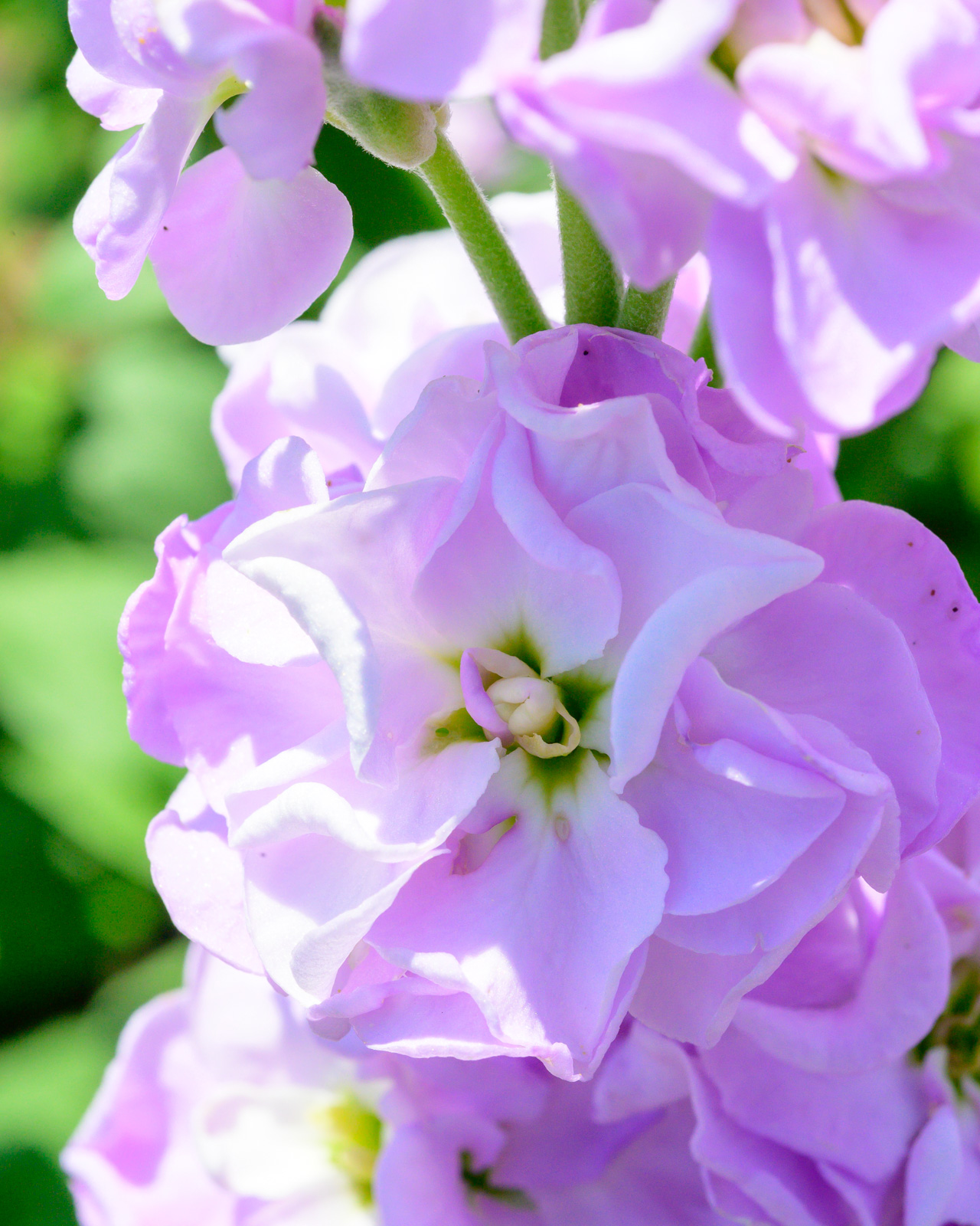 Flower Bloom_44.JPG