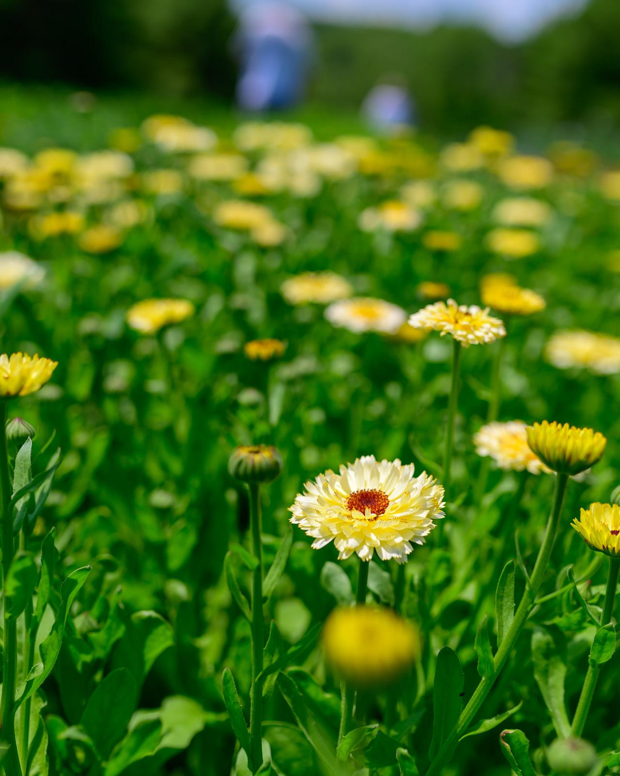 Flower Bloom_71.JPG