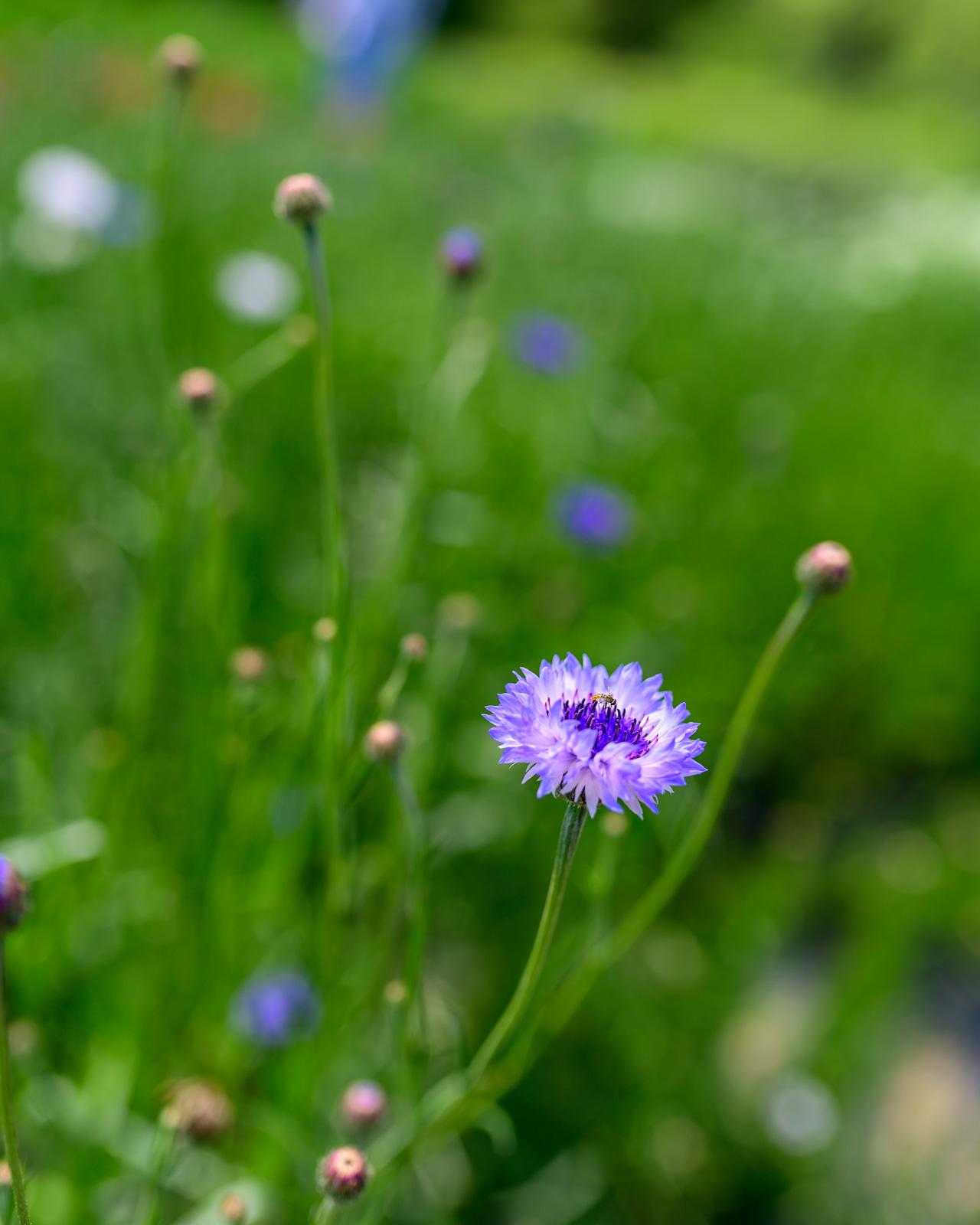 Flower Bloom_78.JPG