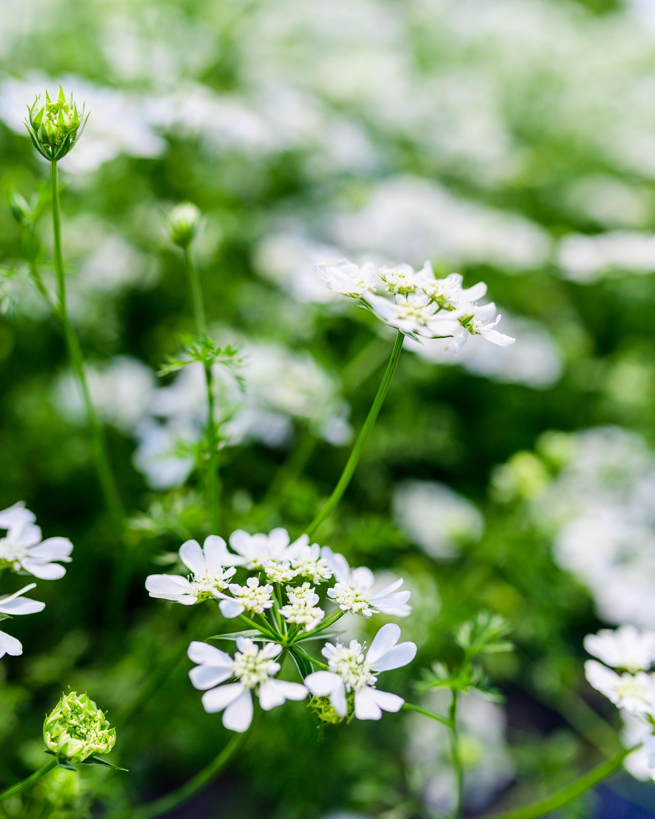 Flower Bloom_79.JPG