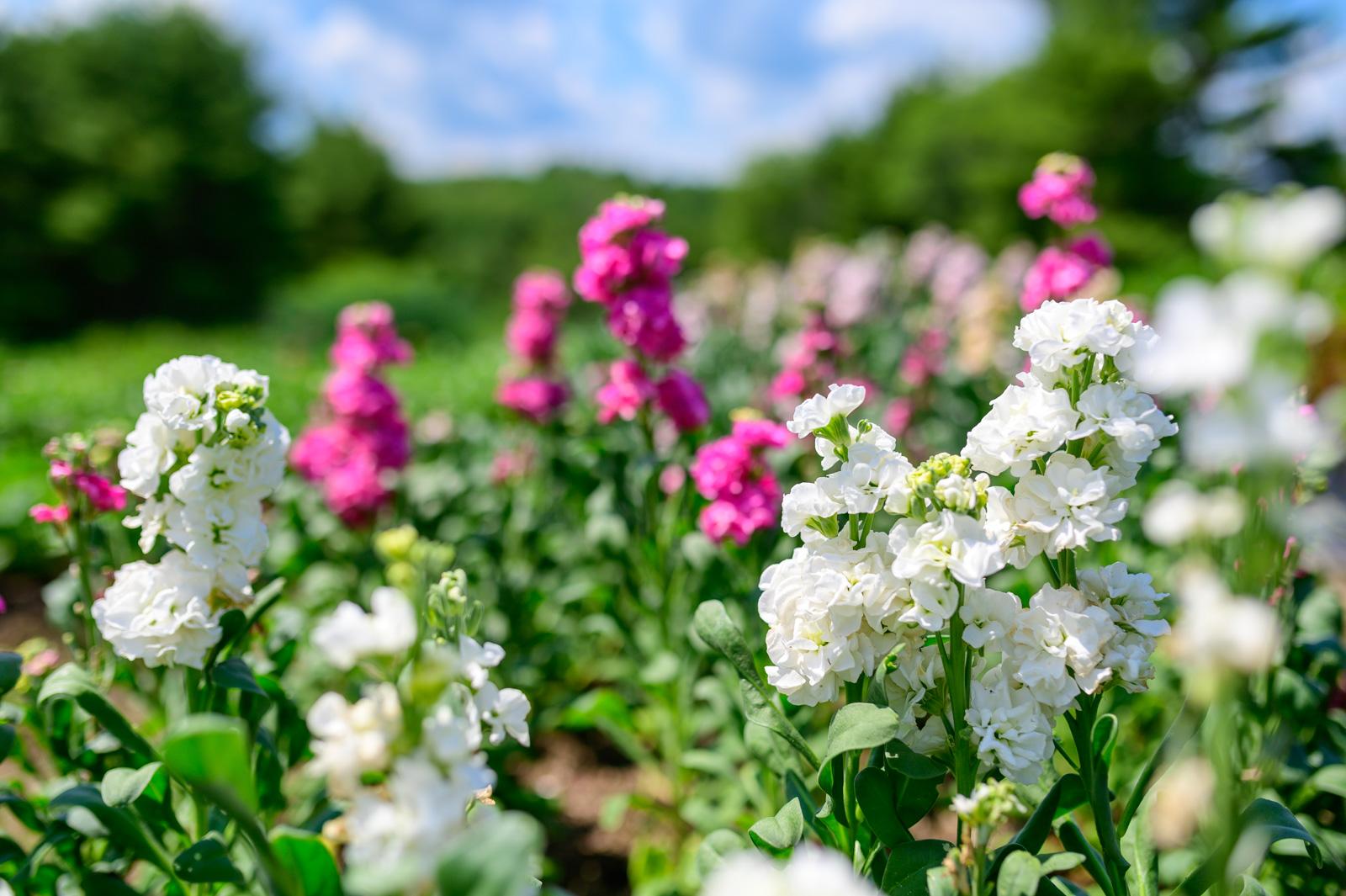 Flower Bloom_89.JPG