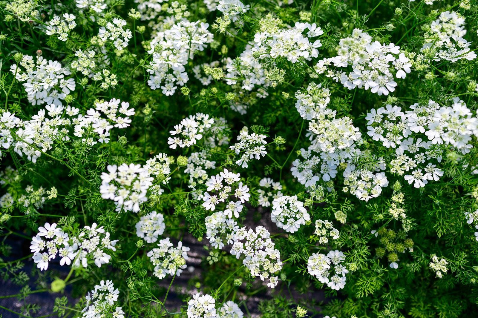 Flower Bloom_82.JPG
