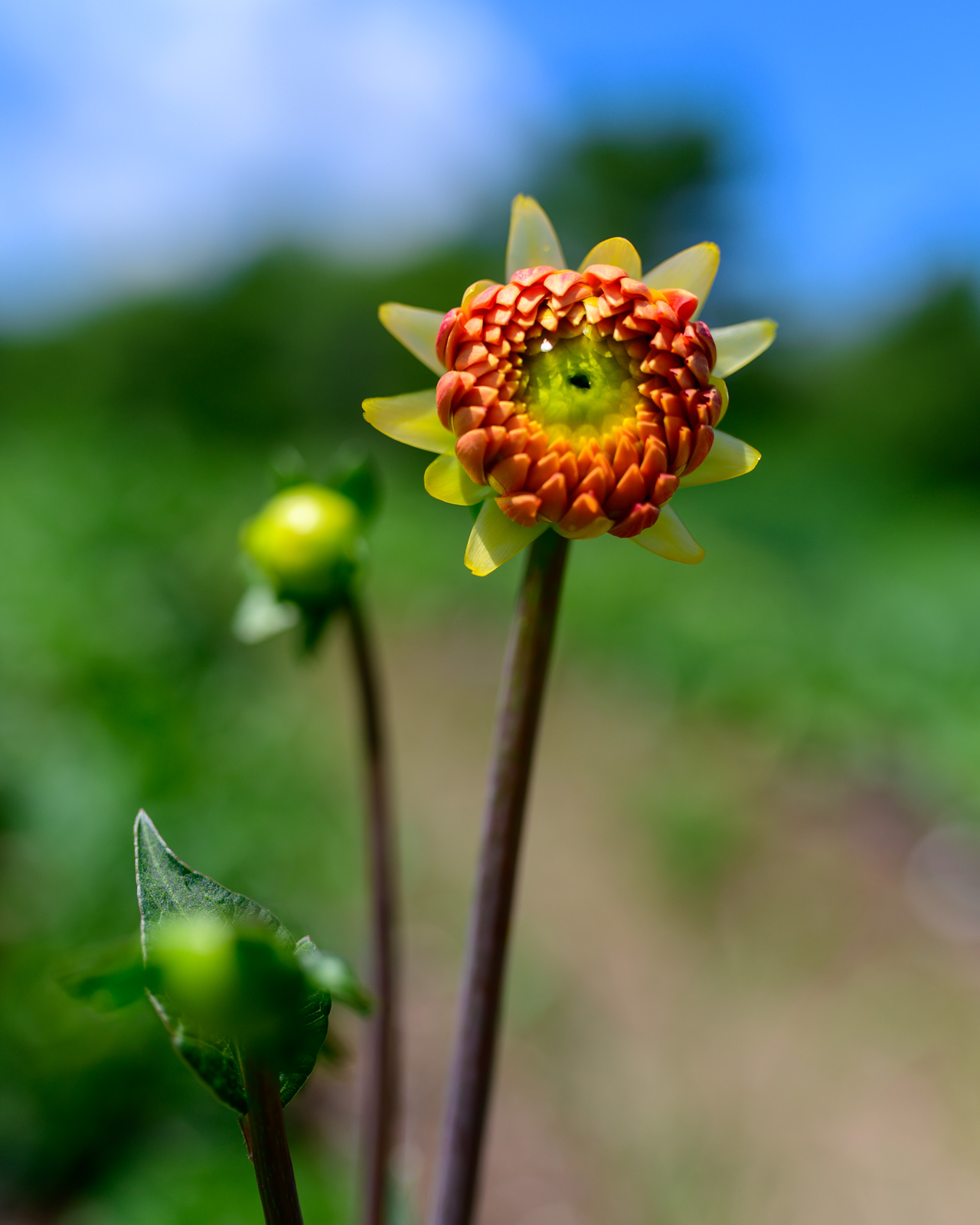 Flower Bloom_99.JPG