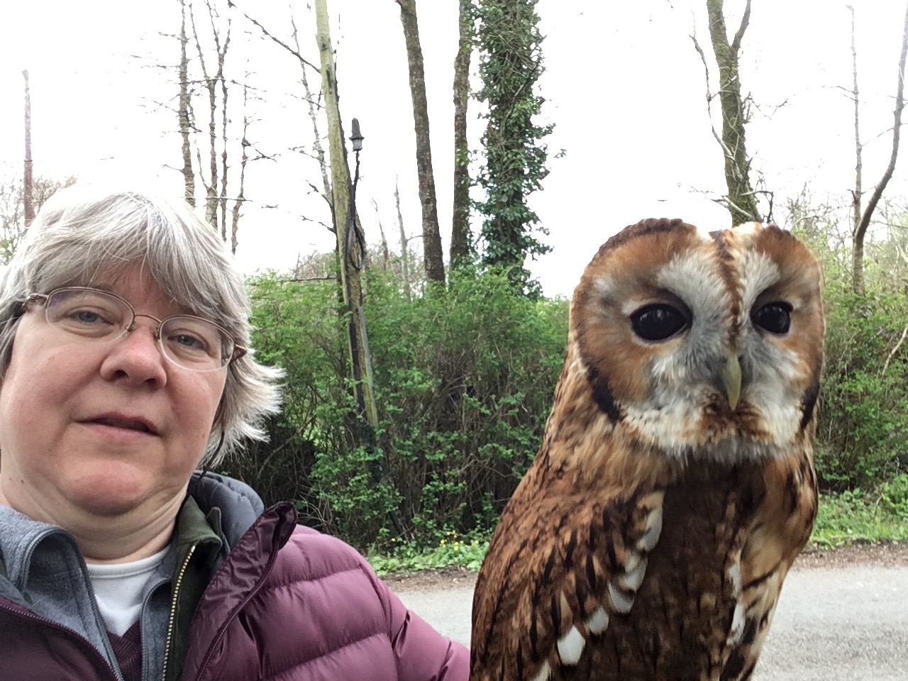 A falconer will introduce you to a variety of birds of prey, and you will get to fly a hawk and hold an owl.