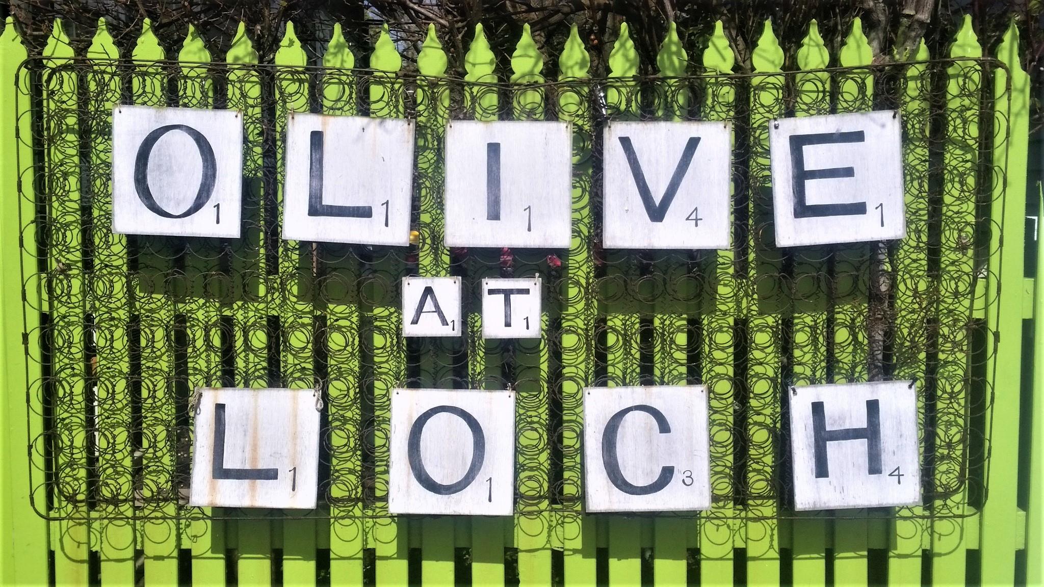 Olive at Loch