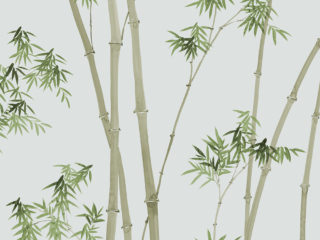 Bamboo-260101-320x240.jpg
