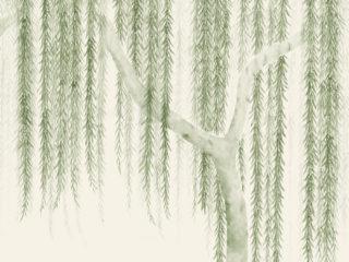 Willow-260501-320x240.jpg