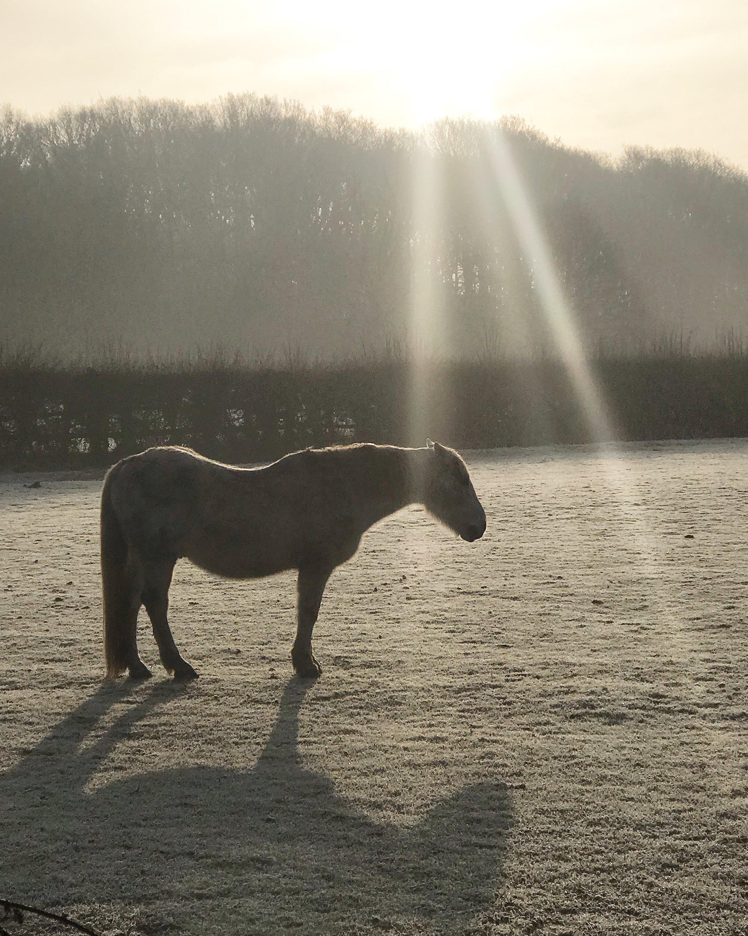 Walking scenery… a frosty field