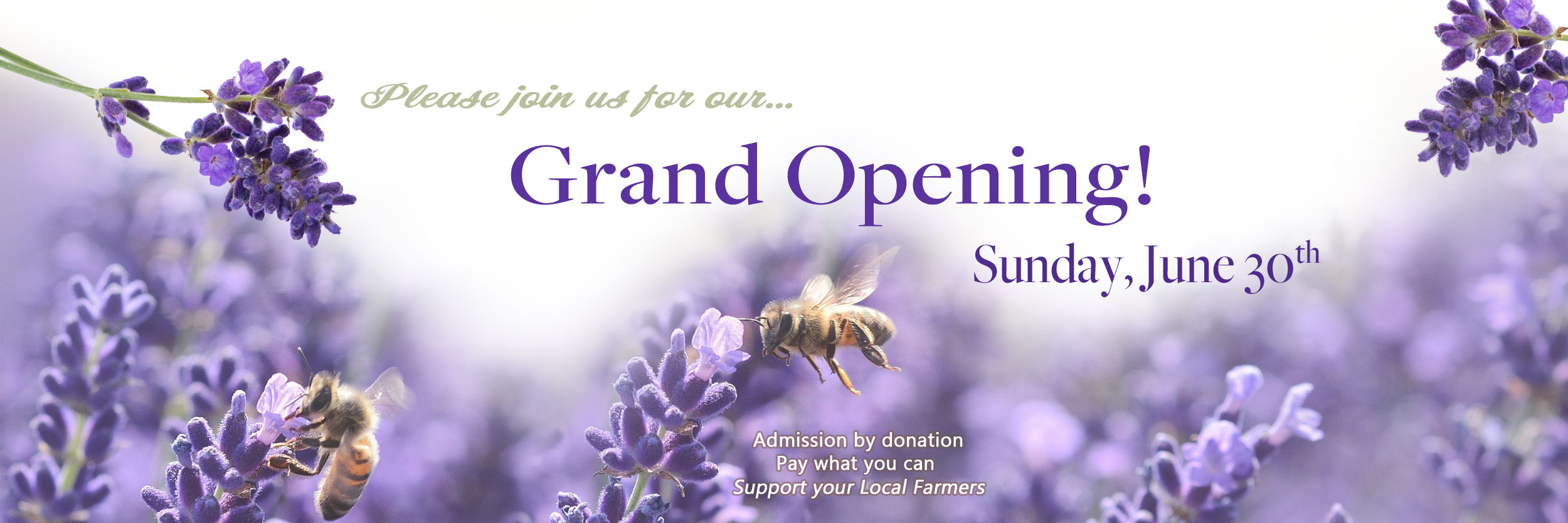 grand-opening-banner.jpg