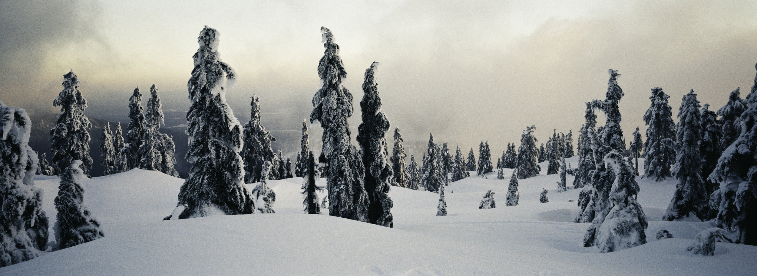 2019_XPAN_Cypress_SnowGhosts (1 of 1).jpg