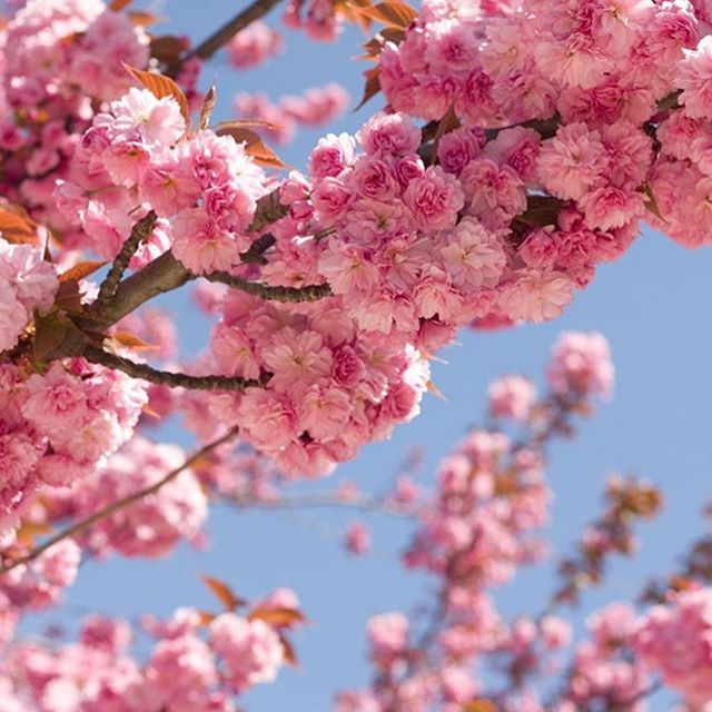 Spring time in the northern hemisphere. What's on the cards this weekend? Play, I hear you say...#spring #play #playtime #summeriscoming #adventuretime #wherewisheshappen #nature #cycles #pink