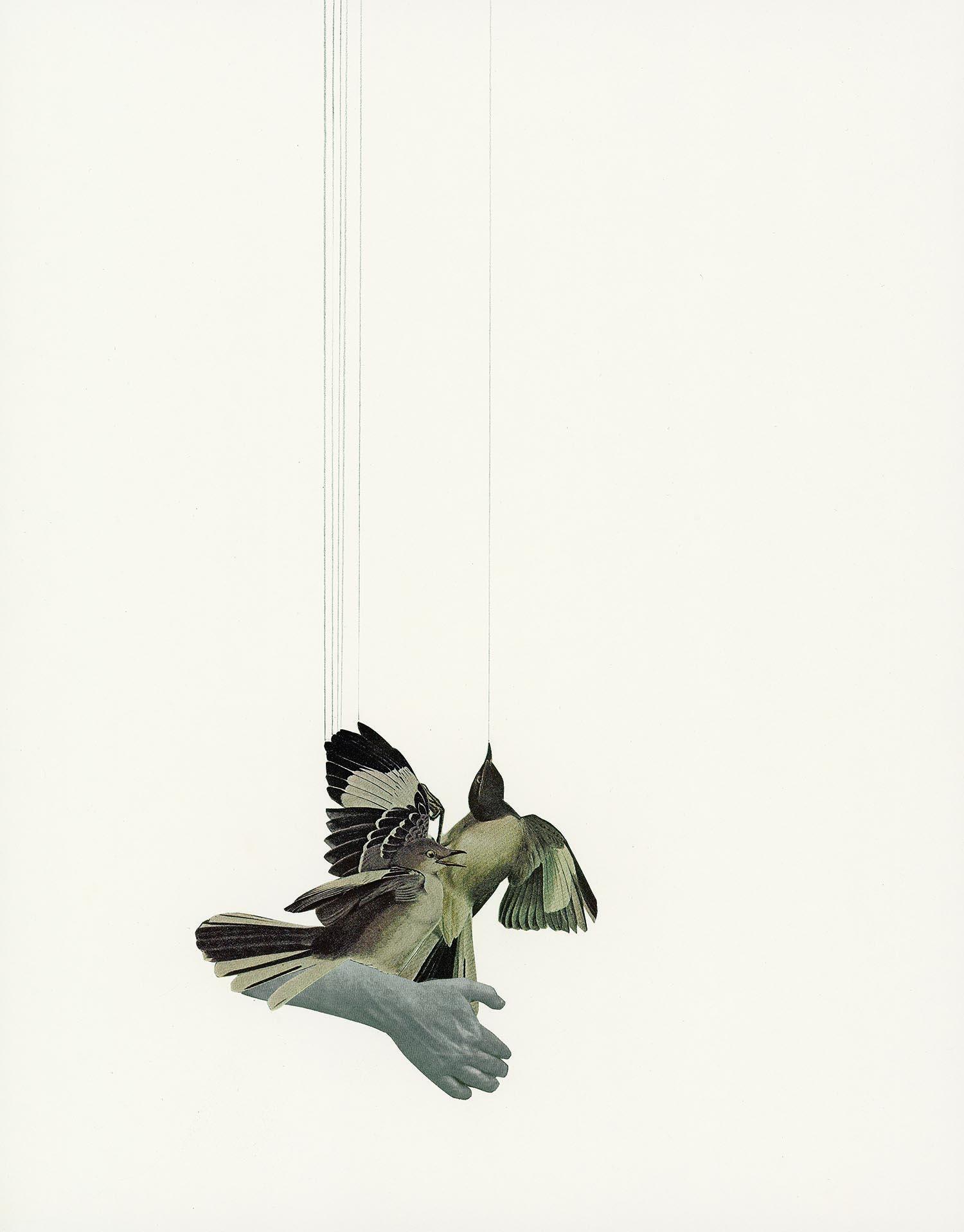 bird watching iv