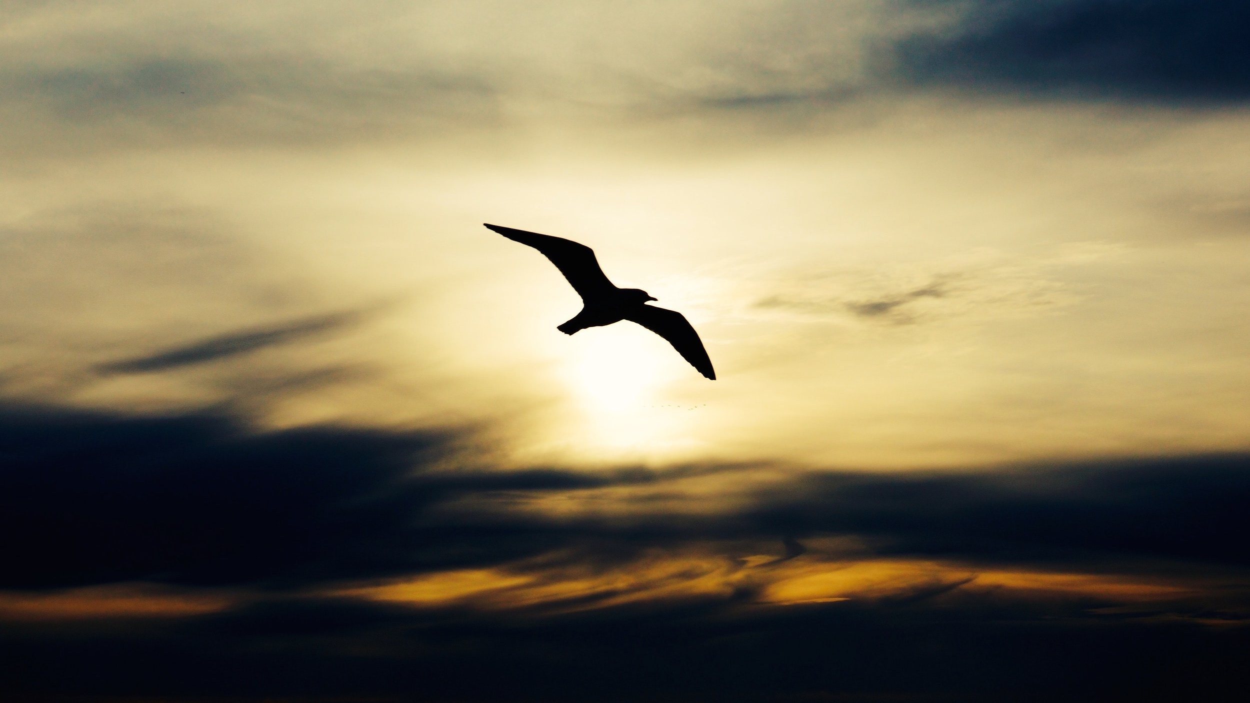 Seagull flying at sunrise over the ocean with dark tones.jpeg