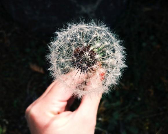 wish-580x463.jpg