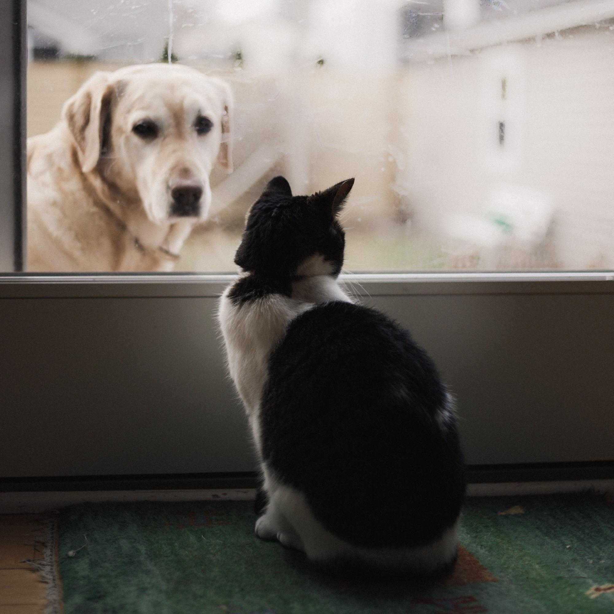 Kat en hond kijken elkaar aan
