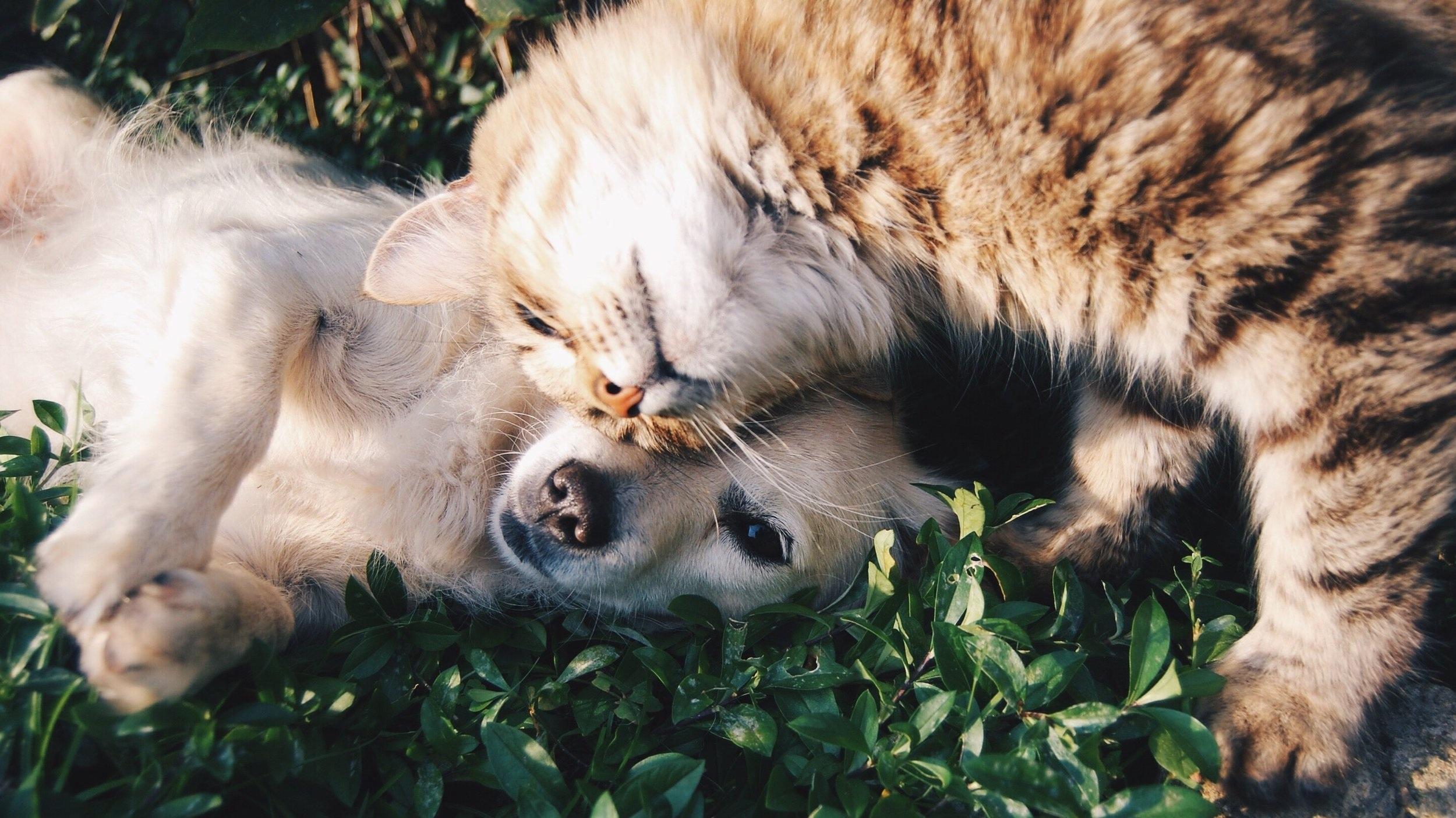 Hond en kat knuffelen met elkaar