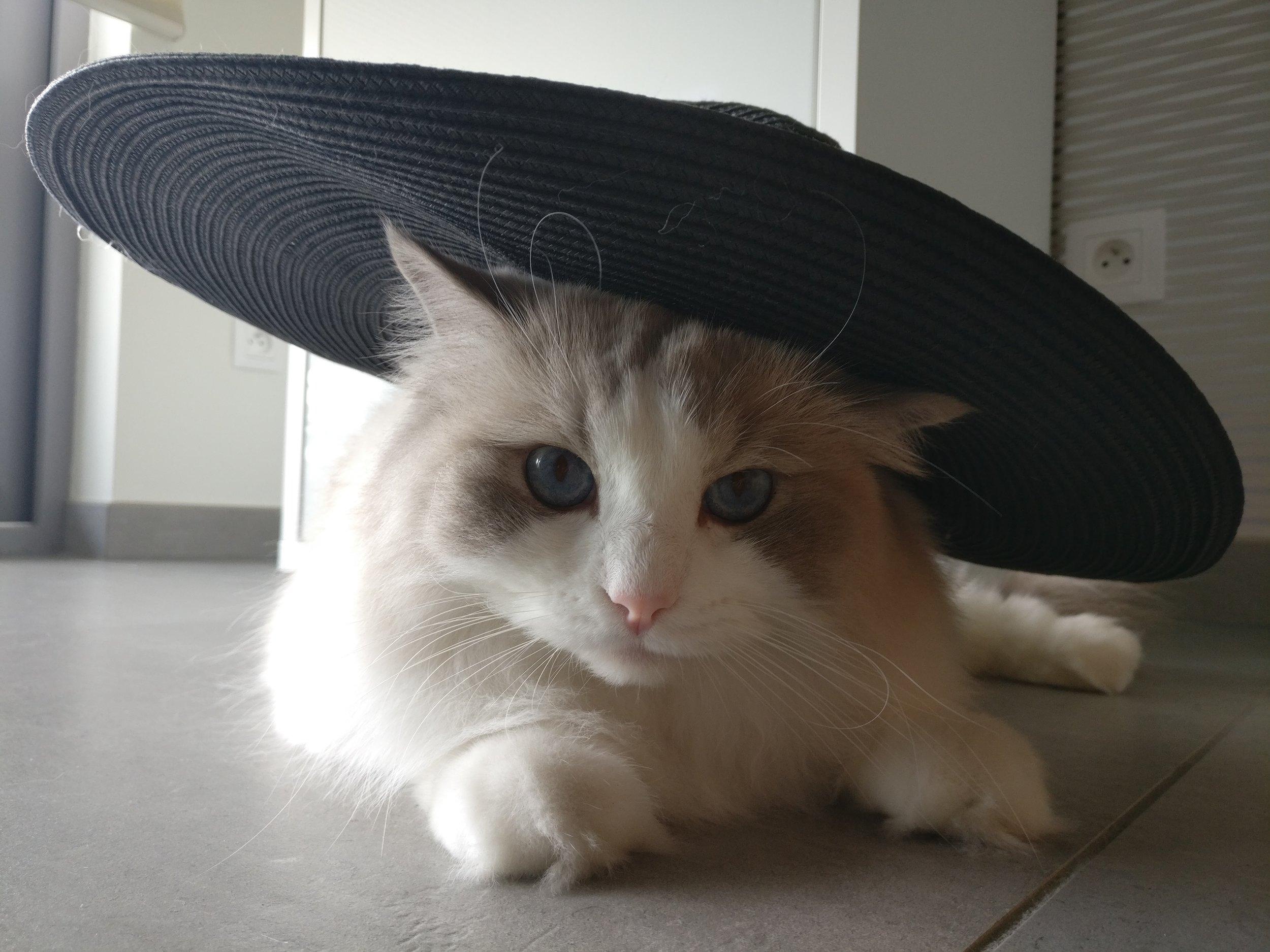 Kat met hoed