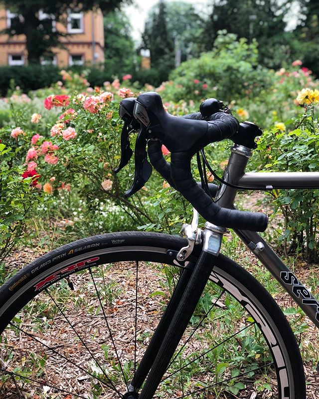 Titanium bike against a wall of flowers 🌹🌹🌹 ⠀⠀⠀⠀⠀⠀⠀⠀⠀ 🚴🏼♀️ Follow @alinevedgd for more pictures of bikes in front of pretty things 🚴🏼♀️ ⠀⠀⠀⠀⠀⠀⠀⠀⠀ #cycling #fromwhereiride #outsideisfree #cyclinglife #roadbike #strava #bikeporn #bicycles #lifebehindhandlebars #roadcycling #roadslikethese #lovecycling #cyclingphoto #roadtonowhere #cyclingday #cyclingaddict #ilovecycling #cyclingphotography #roadbikes #cyclingshots #rennradliebe