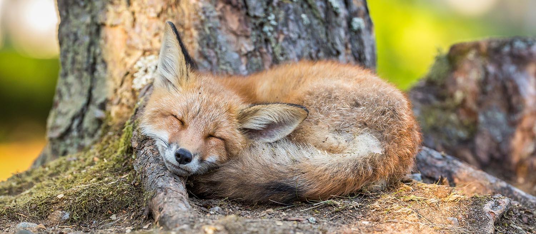 fox22.jpg