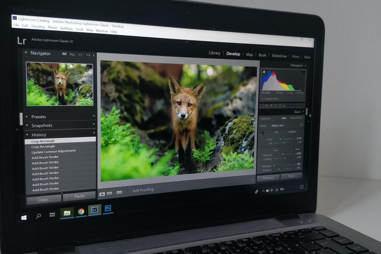 WILDLIFE PHOTOGRAPHY & EDITING - JUNE 6TH 2019 - SOLD OUT