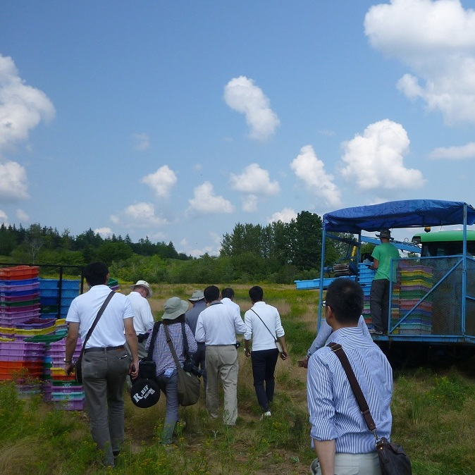 ワイルドブルーベリー生産農家の視察の様子