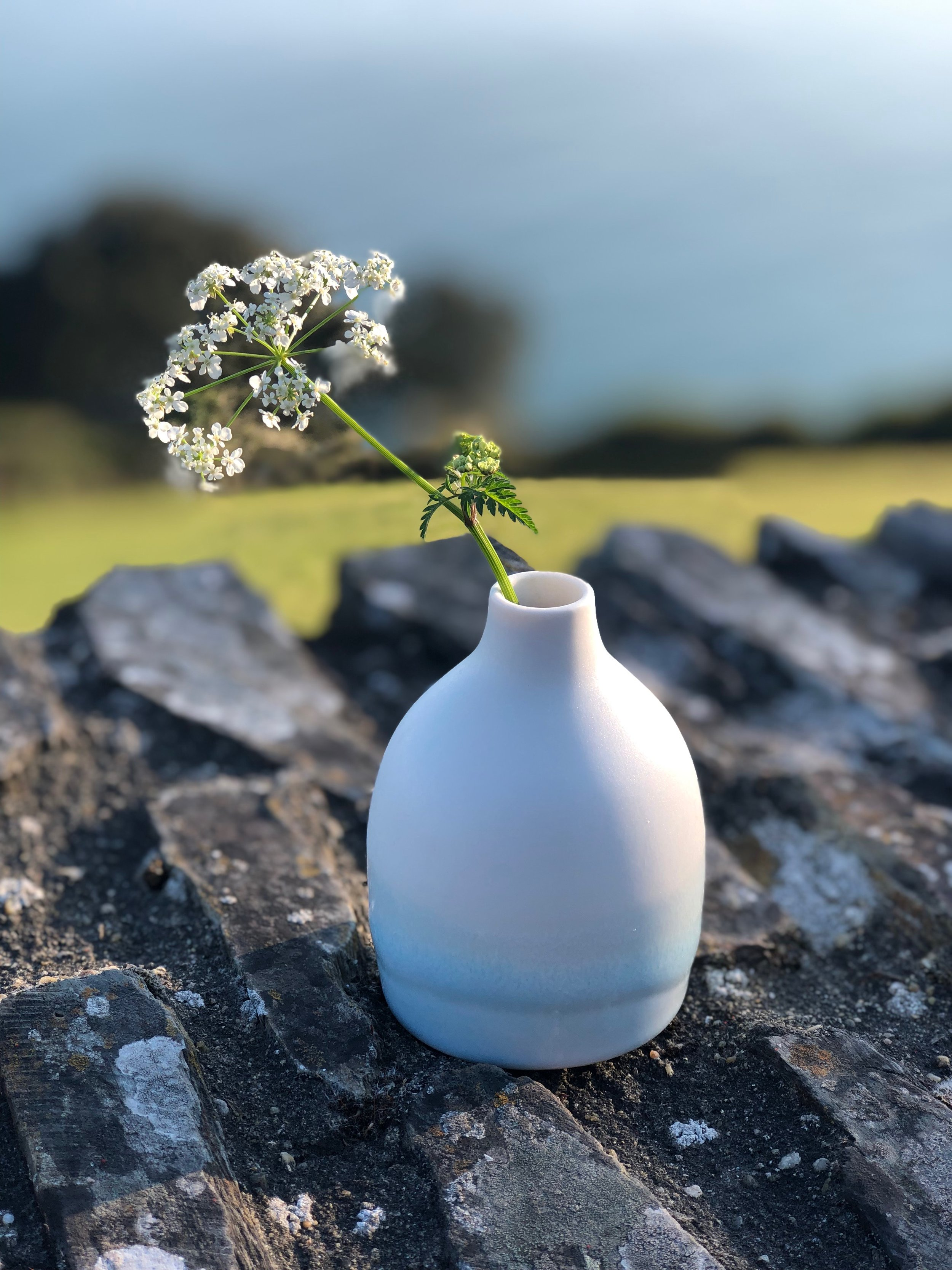 'Sea-breeze' bud vase taken on a Devonshire stone wall, overlooking the sea at Blackpool Sands.